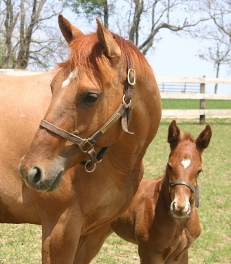 Red Mare and Foal image.